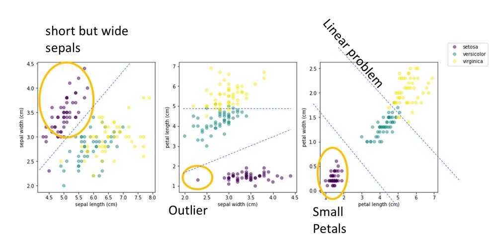 variable correlation in the Iris dataset