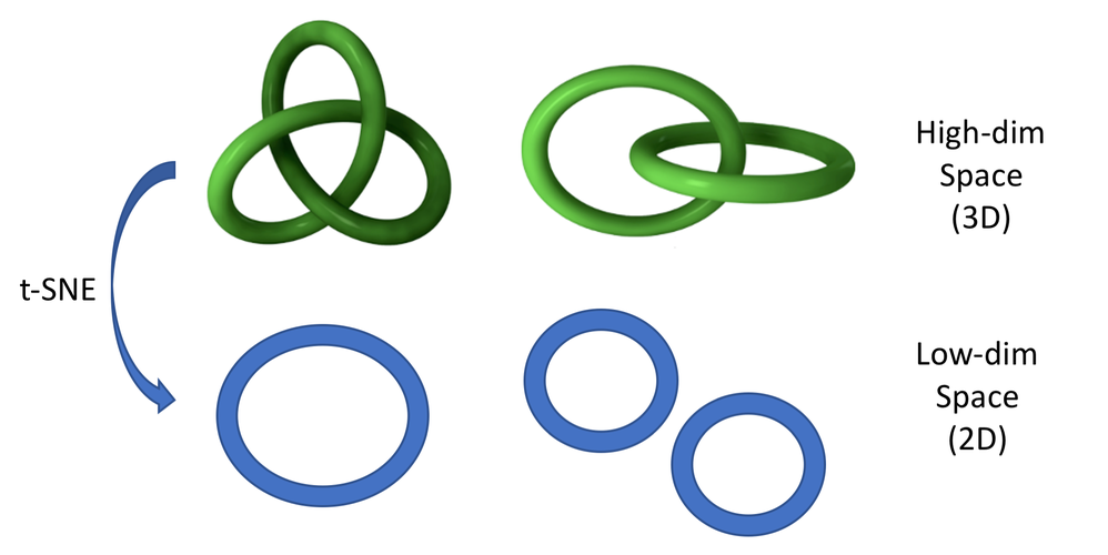 different kinds of 1D manyfolds in 3D space